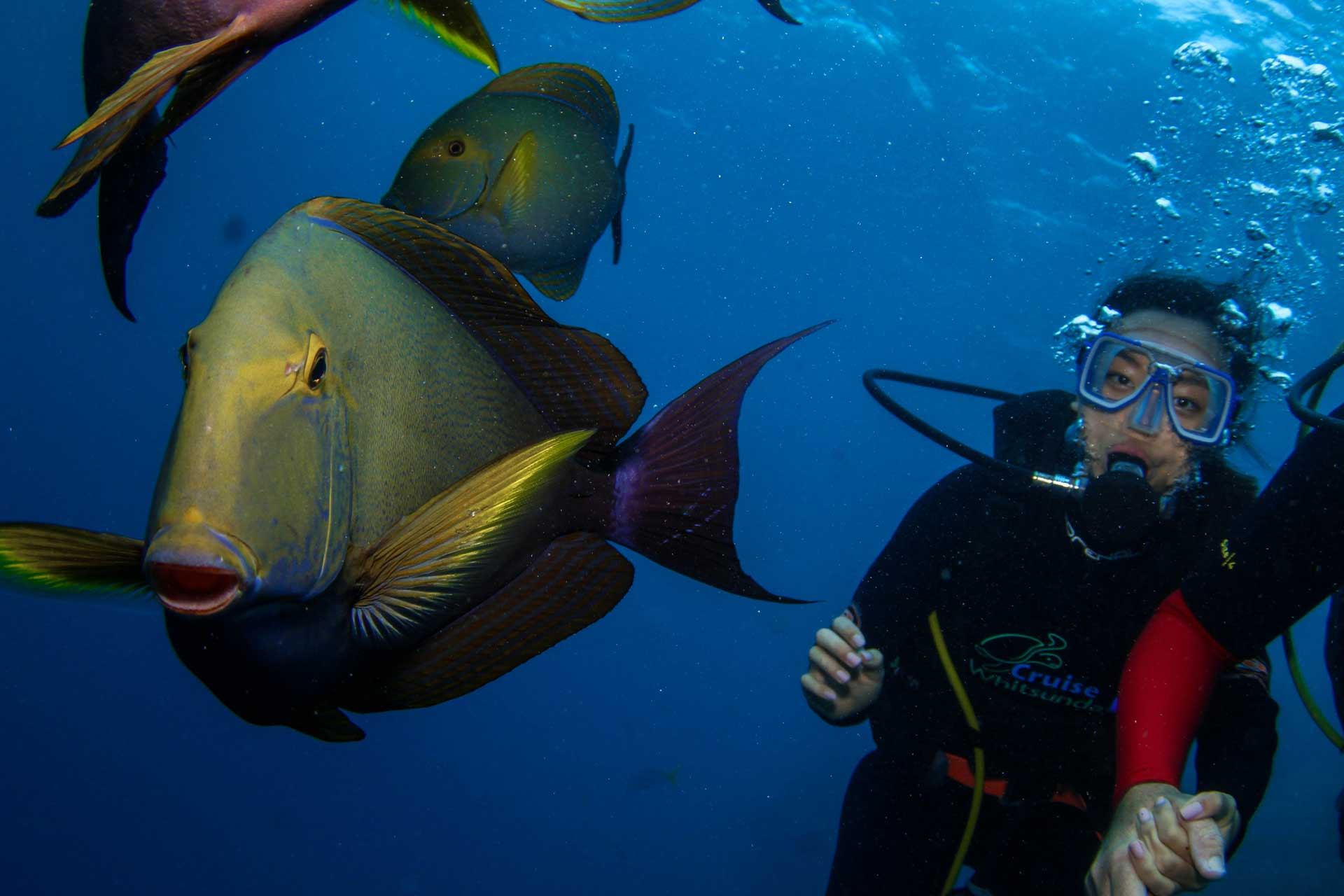 Scuba Diving with fishes at the Great Barrier Reef