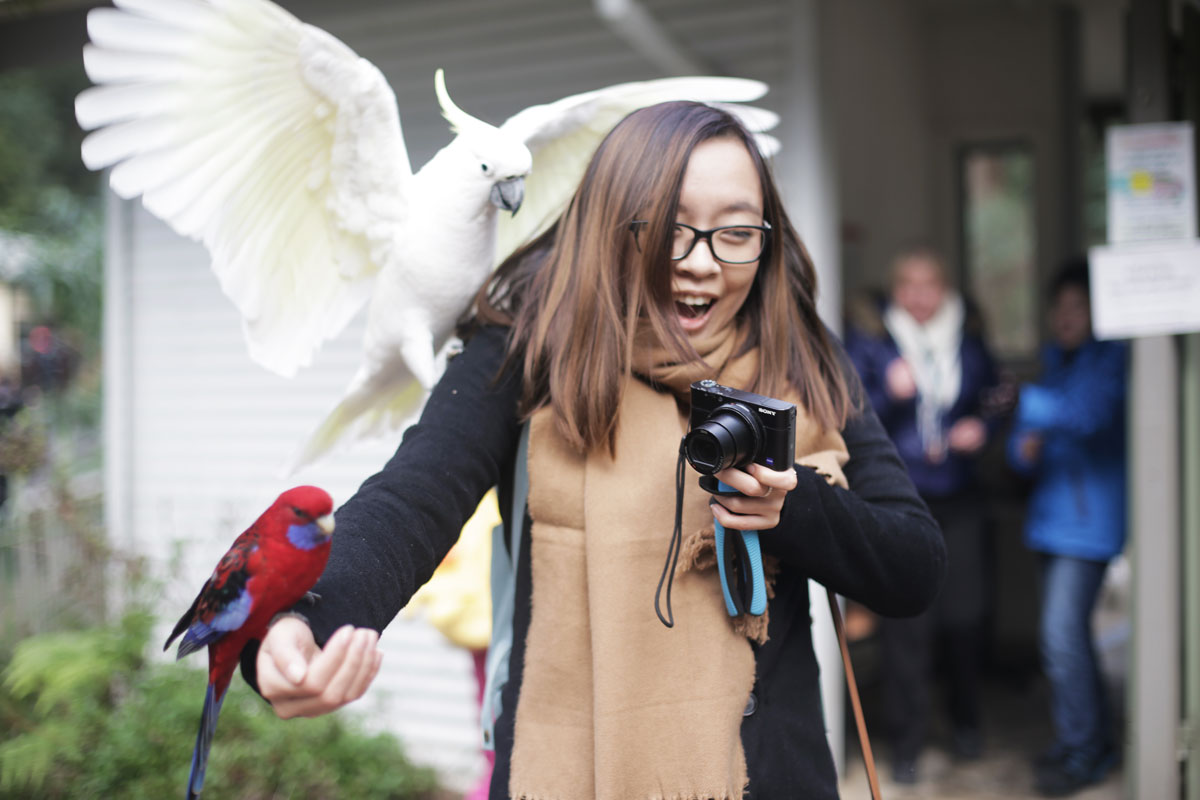 Getting attacked by Cockatoos and Crimson Rosellas