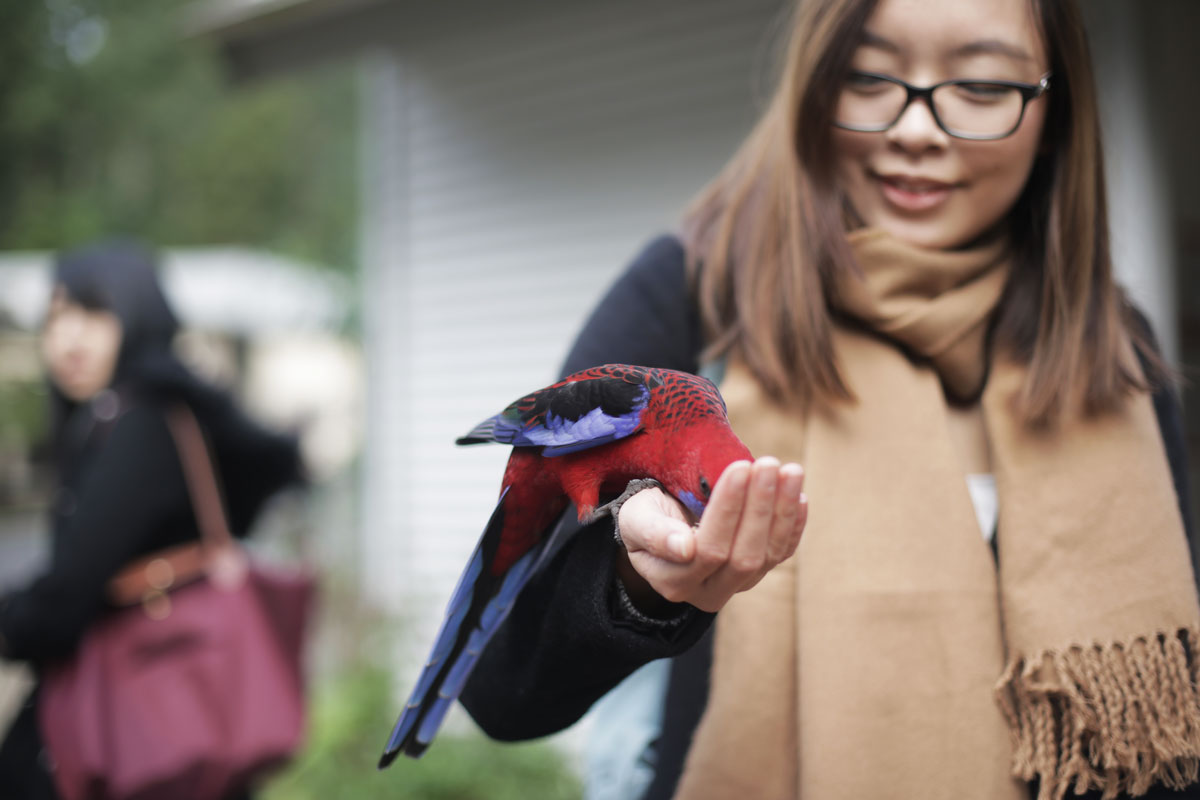 I feed birds coz nature is awesome