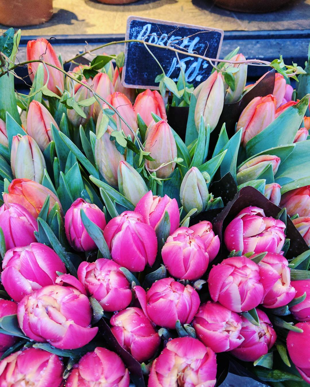 Fresh tulips in Stockholm