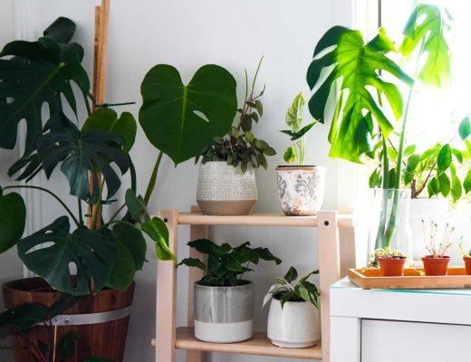 Top Indoor Plants © Leonie Sii